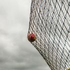 Cricket Ball Stop Netting System | Net World Sports